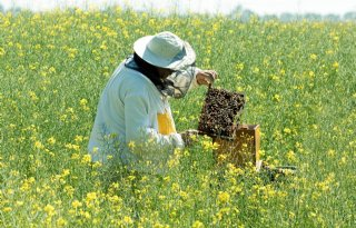 Kanttekeningen bij verbod 'bijengif'