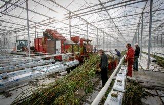 Meer+rendement+halen+uit+restproducten+tuinbouw