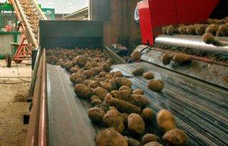 Pootgoedbedrijf+betrapt+op+omkatten+consumptieaardappelen