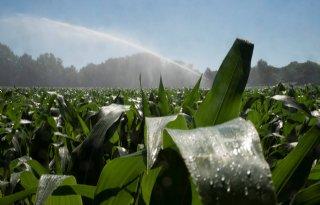 Agrifirm%3A+%27Kwaliteit+mais+gaat+boven+kwantiteit%27