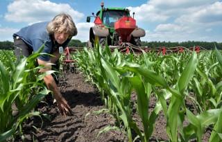 Graszaad+tussen+mais+voor+schoner+grondwater