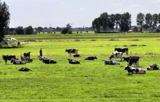 Noord-Nederlandse boer moet duurzaamheid oppakken