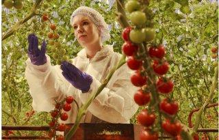 Export landbouw naar VK onttrekt zich aan daling