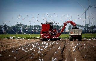 Meer+landbouwgrond+voor+bollenteelt