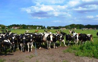 Geld+Groene+Uitweg+voor+verbetering+boerenbedrijf