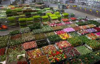 Export bloemen en planten houdt voorsprong vast