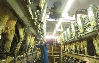 Ventilatoren in zijwand zorgen voor betere koeling melkstal