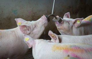 Dierenarts+wil+verbeterplan+dierenwelzijn