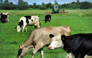 Friese+landbouwvoorlichting+terug+in+beeld