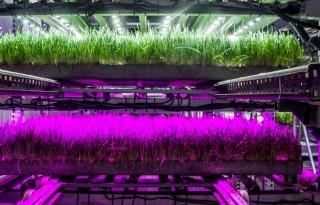 Vertical+farming+helpt+om+9+miljard+mensen+te+voeden
