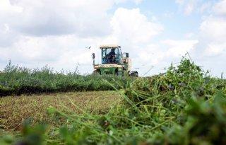 Stikstoftoevoer naar biologische grond in België uitdaging