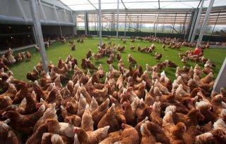 Hoogleraar+pleit+voor++balans+bij+productie+pluimvee