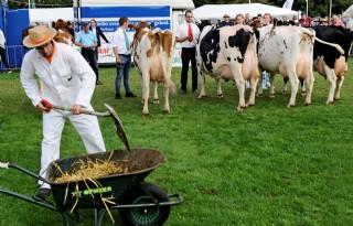 Rijen koeien en mensen op landbouwshow Opmeer