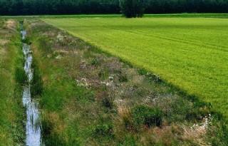 Waterschap Rivierenland verpacht graslandpercelen