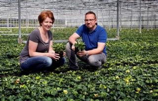Vasteplantenkweker zet in op kwaliteit en snelheid