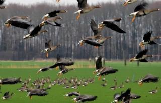 6%2E000+hectare+geen+ganzengedooggebied