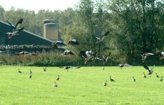 LTO Noord wil beter overleg in Overijssel