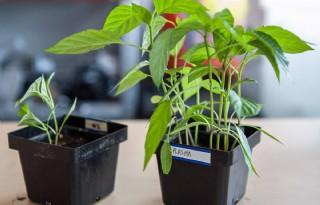 Veelbelovend plasma helpt boer en burger