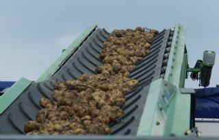 Grote+aardappelvoorraden+en+onzekere+kwaliteit