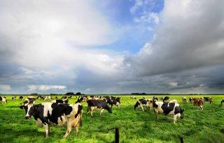 %27Innovatieklimaat+Nederland+staat+veehouderij+in+de+weg%27