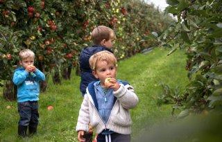 Kinderen+eten+te+weinig+groente+en+fruit