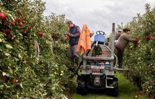 Arbeidsproductiviteit+land%2D+en+tuinbouw+flink+gegroeid
