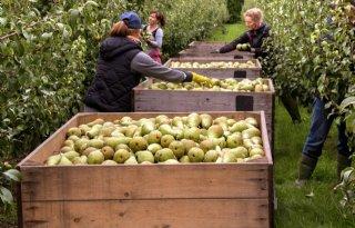 'Fruitbedrijven vallen om door stroomtaks'