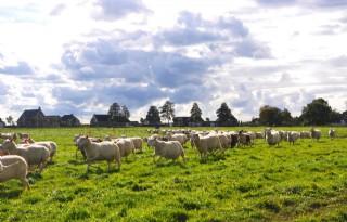 %27Markt+van+schapenmelkers+is+verzadigd%27