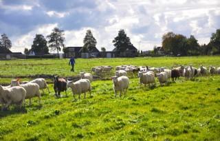 %27Schapen+melken+aparte+tak+van+sport%27