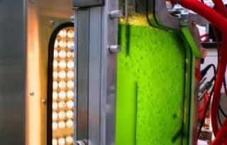 Algen+zijn+nog+niet+het+groene+goud