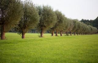 Boeren+willen+bomen+in+agrarische+bedrijfsvoering