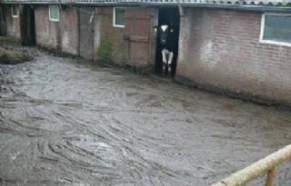Verwaarloosde+dieren+bij+veehouder+in+Noord%2DBrabant