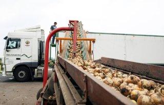 Senegal+stelt+invoerquotum+in+voor+uien