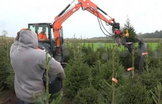 Italianen+staan+nu+al+te+springen+om+Nederlandse+kerstboom