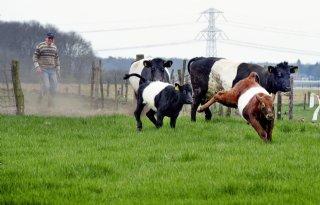 Weer+80%2E000+euro+subsidie+voor+zeldzame+huisdierrassen
