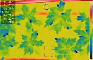 Planten+leren+begrijpen+met+infraroodbeelden
