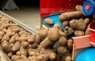 Dreigend+aardappeltekort+in+Nieuw%2DZeeland
