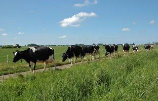Schouten+onderzoekt+pilot+bedrijfsspecifieke+fosfaatrechten+melkvee
