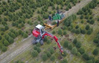 Kwekers+verwachten+meer+kerstbomen+te+verkopen