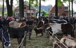 Vierhonderd+paarden+minder+op+Zuidlaardermarkt