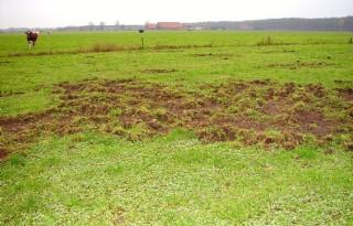 Wild zwijn niet enkel probleem van grondgebruiker