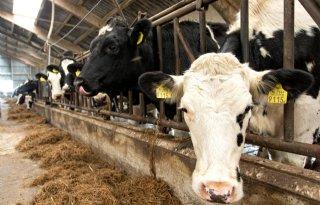 Biologische+melkveehouder+hanteert+aanvullende+normen