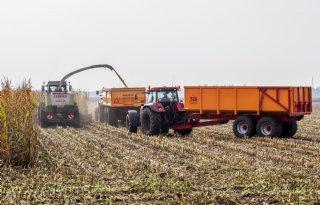 50 ton mais van een hectare is fabeltje