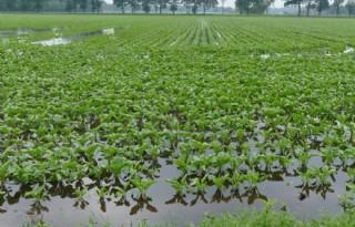 Boeren ontvangen schadevergoeding wateroverlast