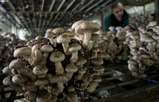 Duitser vraagt 'vertrouwde' paddenstoel