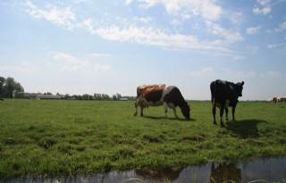 Landbouw neemt initiatief bij studie naar waterparken