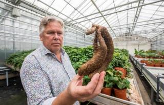 Planten hebben stoffen tegen ziek en zeer