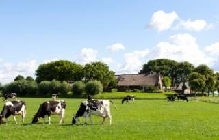 Rentedaling+en+pachtprijs+ondermijnen+boer+Kampereiland