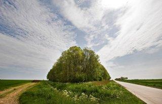 Boeren+plegen+geen+landje+pik+in+Drenthe