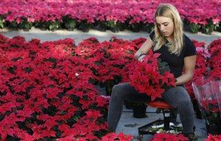 Exportstijging+bloemen+en+planten+valt+licht+terug